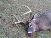 06-gregs-closeup-just-deer